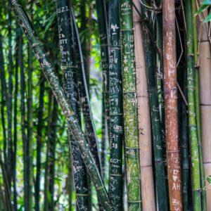 Bambusové kruhové jehlice