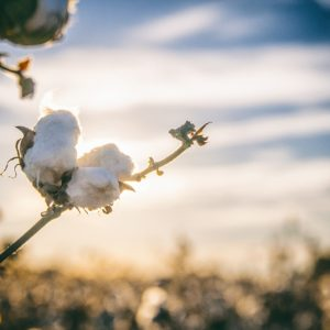 Mercerovaná bavlna